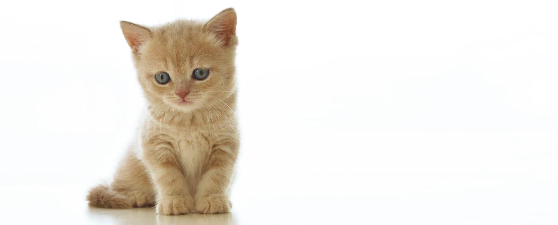 lettiera gatto ecomiao slide