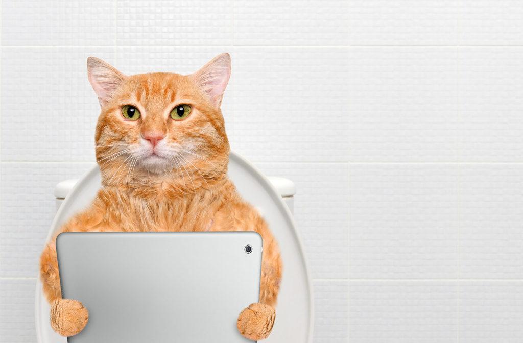 Dove posizionale la lettiera del tuo gatto
