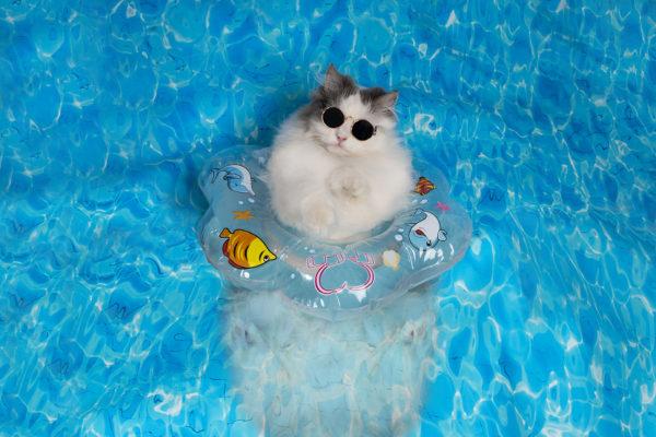 estate e il gatto: consigli Ecomiao
