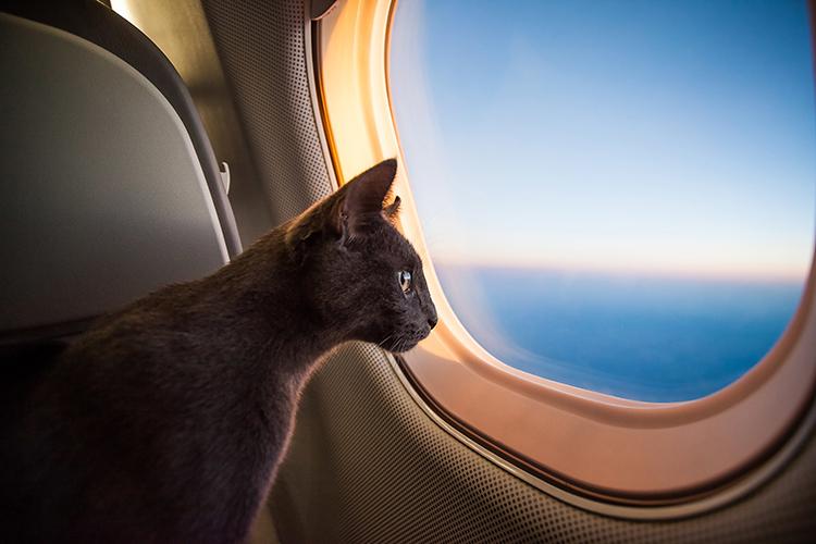 gatto in aereo ecomiao