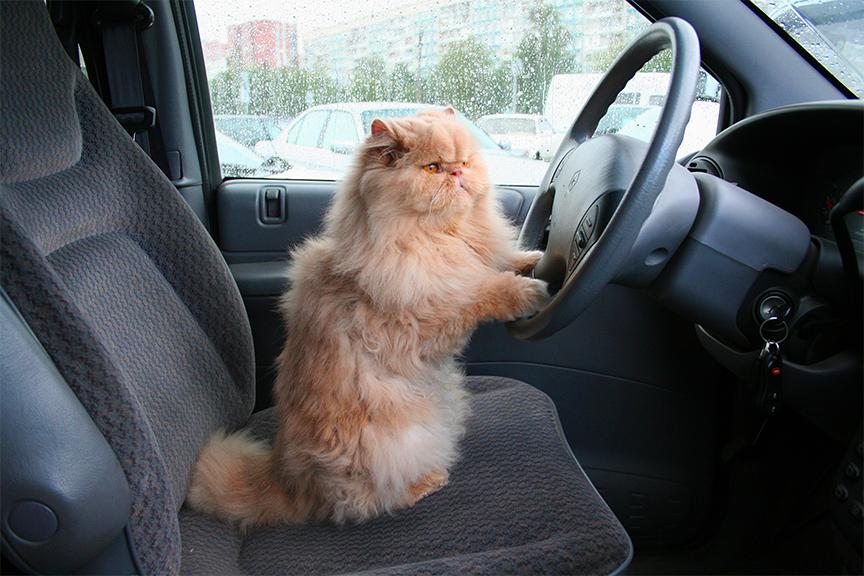 gatto in macchina ecomiao