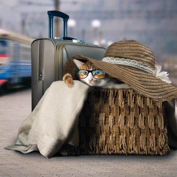 ecomiao gatto in treno